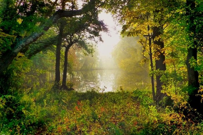 nature-3142302_1920