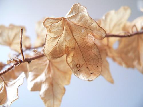 肌のバリア機能は大事!冬のアウトドアで『乾燥』に負けない肌作り