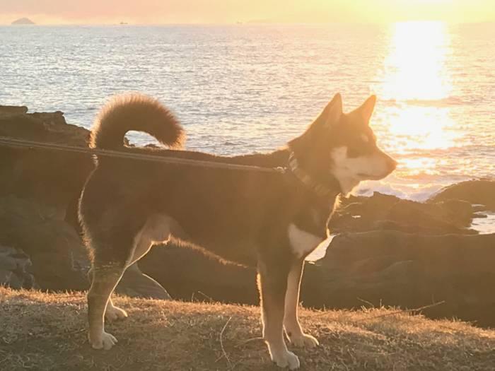 愛犬と春の海ピクニック!楽しみ方と、あると便利な持ち物